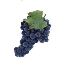 انگور سیاه ممتاز