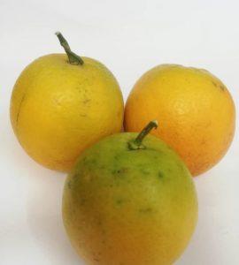 پرتقال جنگلی